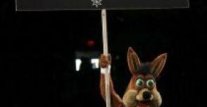 【馬刺記事】:馬刺吉祥物Coyote歡度32週年
