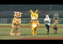 亞洲冬季棒球聯盟,曾經延宕了7年