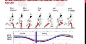 跑步的運動科學與肌肉運動參數解讀