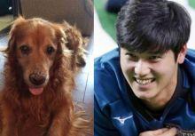 與大谷翔平緣份相繫的愛犬Ace
